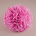 Celebration Peonies Tissue Paper Flowers